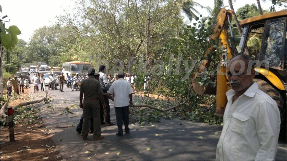 Photos : A large tree branch cut down at Venktapur; 2 women injured