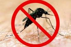 Jeddah records 48 cases of dengue fever in two weeks