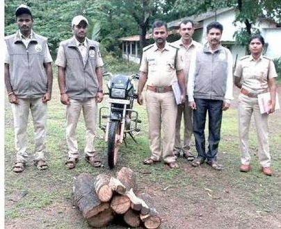 Forest officials seize 73 kg of Sandalwood while being illegally